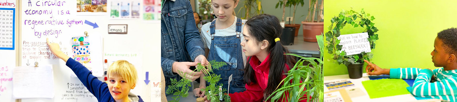 Sustainability at Green Ivy Schools